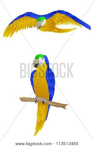 Bird parrot macaw yellow green blue isolated illustration vector