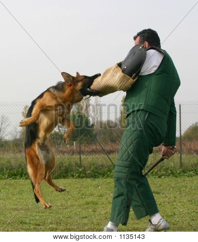 Training Police Dog