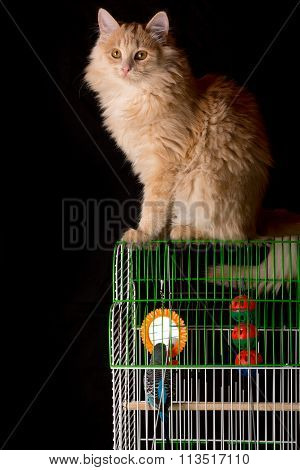 Red Cat Sitting On The Cage With A Parrot.