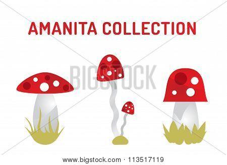 Vector amanita mushrooms isolated on white