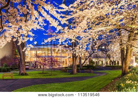 Springtime college campus at Night.