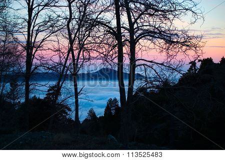 Tree Silhouettes On Troodos 2
