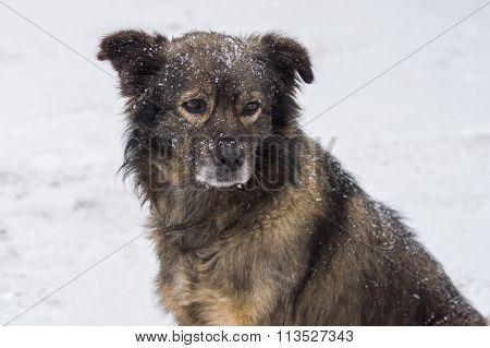 Portrait of cute mixed-breed dog winter season