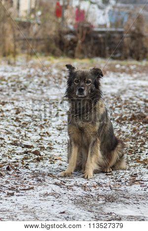 Cute mixed-breed dog daily guarding its yard