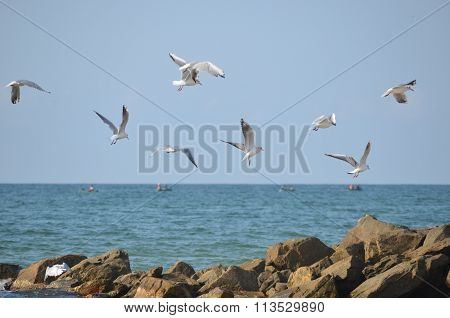 White seagulls flying over the sea waves and stones
