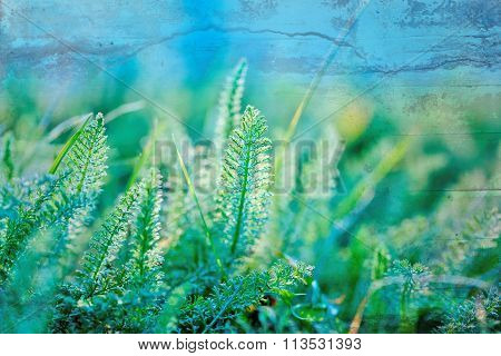 Spring grass - an unusual grass