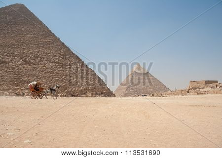 Horse Dragging Cart In Front Of The Giza Pyramids