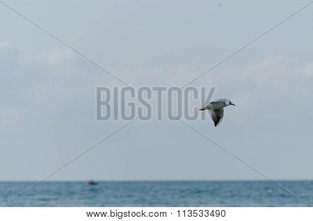 White seagull flying in the open sky