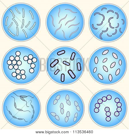Stylized Image Of Different Types Of Bacteria