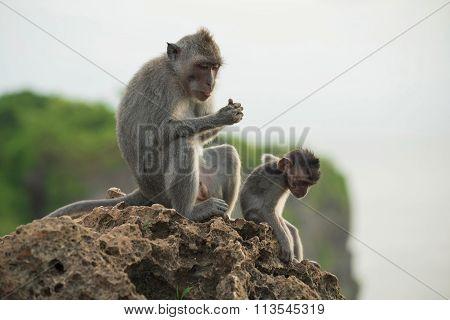 Wild Monkey Habitat Jungle Background Wildlife