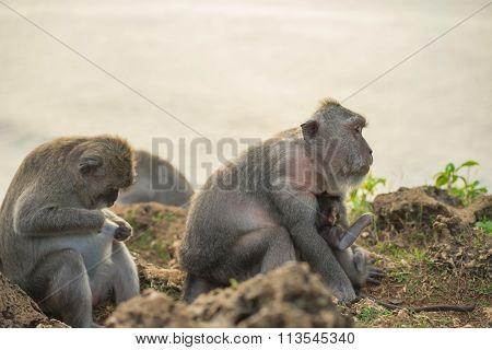 Wild Monkey Family Mom Baby Wildlife Habitat