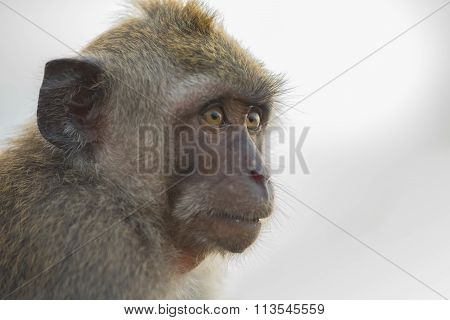 Wild Monkey Face Wildlife Ecotourism Animal