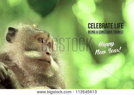 Wild Monkey Wildlife Card Poster Campaign Tourism