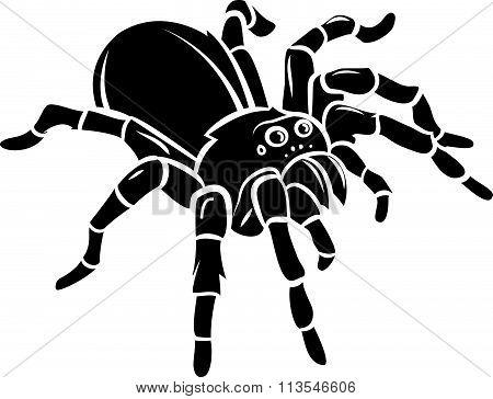Spider vector design .eps 10 illustration design
