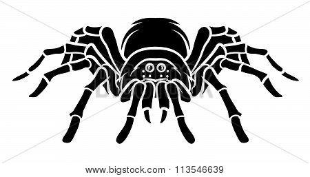 Spider vector .eps10 editable vector illustration design