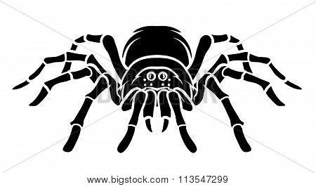 Spider Vector Illustration .eps10 editable vector illustration design