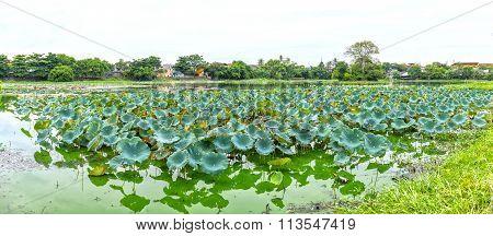Panorama Lotus lagoon