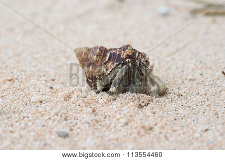 Macro close up of a hermit crab