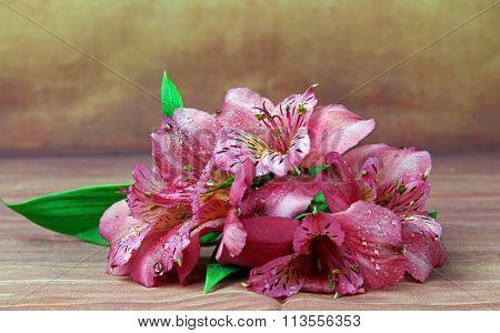 A bunch of pink Alstroemeria