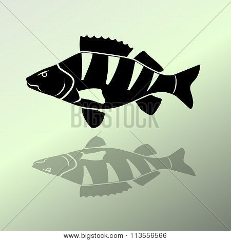 Fish icon set. Perch, European perch, redfin perch. Black sign with shadow on light green. Animal, f