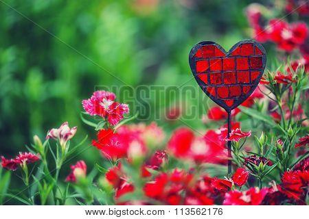 Summer Flower Garden With Beautiful Pink Cloves