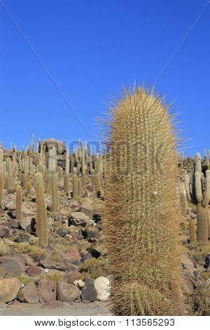 Isla Incahuasi Or Cacti Island