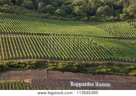 Beautiful Patterns Created By Vineyards On Slopes Of  Bopparder Hamm Over The Rhine Valley, Germany