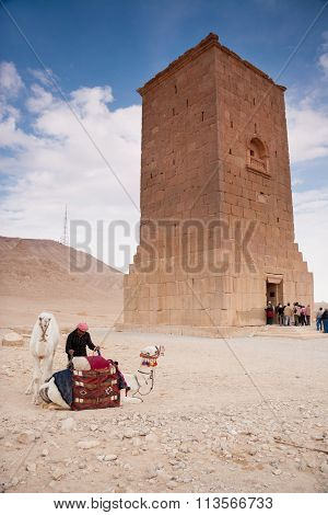 Camels And Camel Rider At The Site Of The  Ancient City Of Palmyra, Syrian Desert