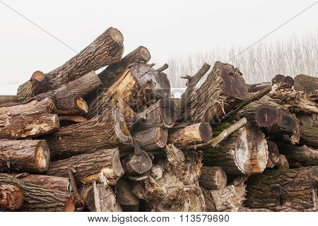 Chopped Wood In Stacks