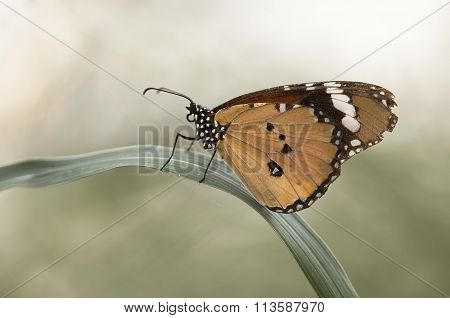 Lonely butterfly
