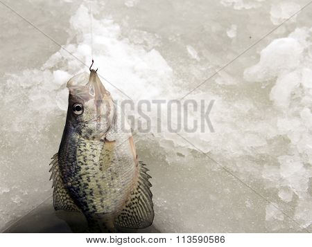 Ice Fishing For Aa Crappie