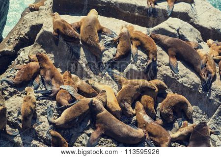 sea lions overlies on stone