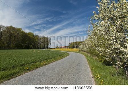 Fruit Trees At A Country Road