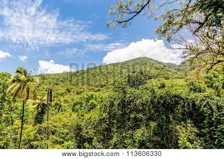 Jungled Covered Mountain