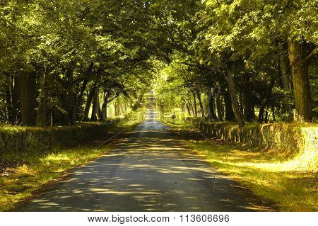 Carnac (brittany, France): Road