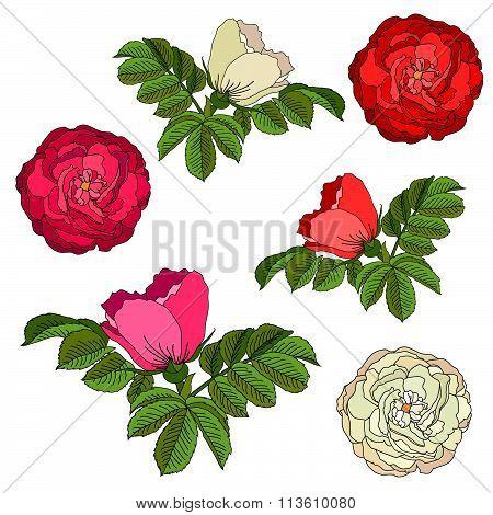 Set Of Roses/briar.