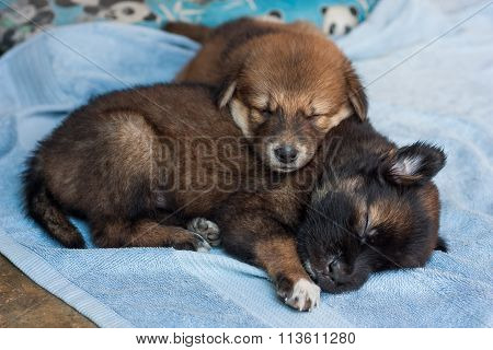 Two Puppies Sleeping Together Happily.