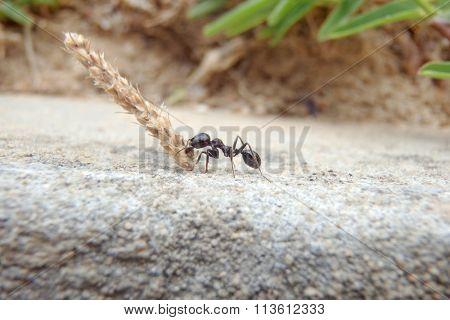 Ant isolated on black background