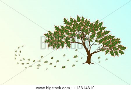 Spring Red Oak  Tree