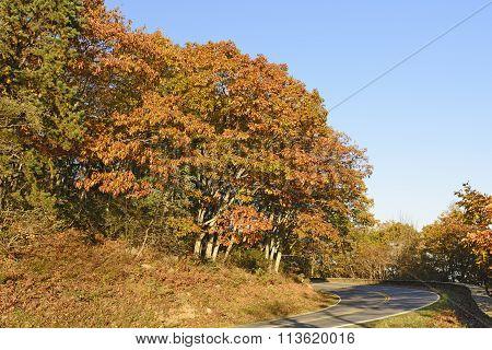 Fall Colors Along A Mountain Road