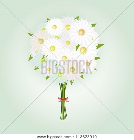 Chamomile Flower Or White Daisy Daisy Bouquet