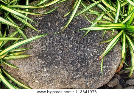 Brown Stone On The Garden With Green Plants