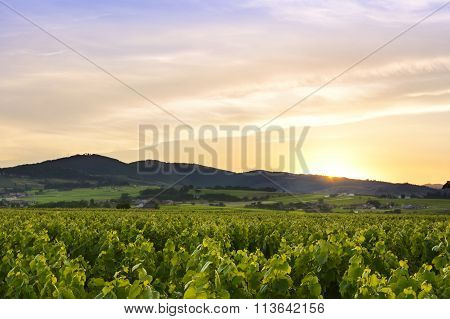 Sun Is Going Down, Beaujolais, France