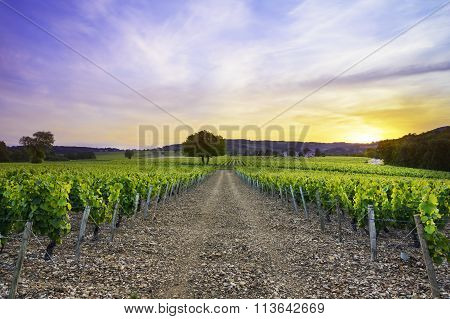 Sunset Over Vineyards Of Frontenas Village, Beaujolais, France