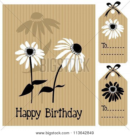 Happy Birthday Card With Echinacea, Daisy Flower, Vector Illustration