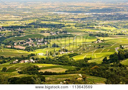 Vineyards Of Beaujolais, Rhone, France