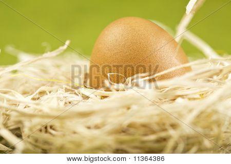 Chick Portrait