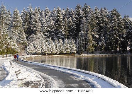 Stanley Park In Winter