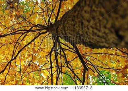 Tree Spidary look
