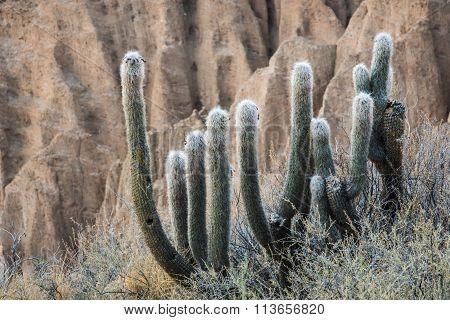 Altiplano, Bolivia